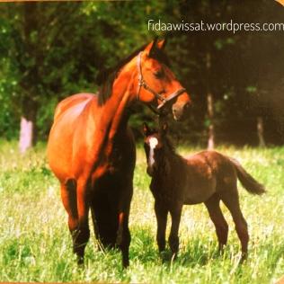 صورة حقيقة للحصان